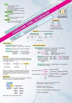 Tıpatıp Yayınları TYT Biyoloji Poster Notları