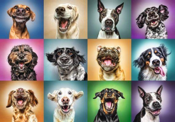 Trefl Puzzle Funny Dog Portraits 1000 Parça