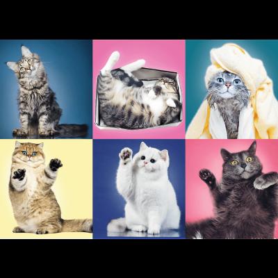 Trefl Puzzle Kittens 500 Parça