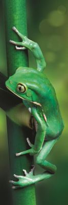 Trefl Puzzle Home Gallery Little Frog 300 Parça