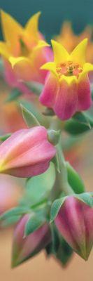 Trefl Puzzle Home Gallery Flowers In Bloom 300 Parça