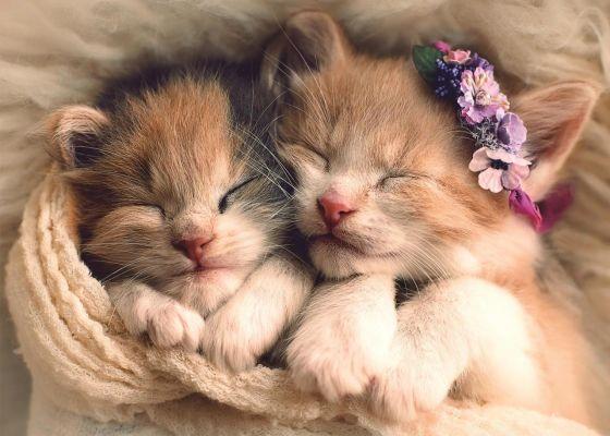 Trefl Puzzle Sleeping Kittens 500 Parça