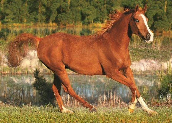 Trefl Puzzle The Beauty Of Gallop 500 Parça